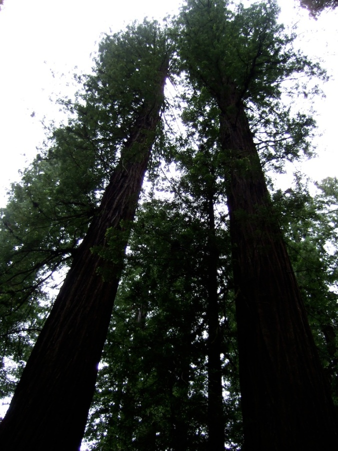 the redwoods!
